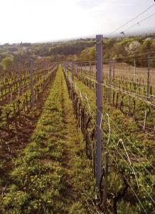Vinogradarski stup